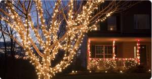 holiday lights on a tree and home at night
