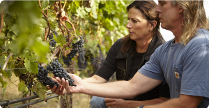 man and woman looking at grapes in a vineyard
