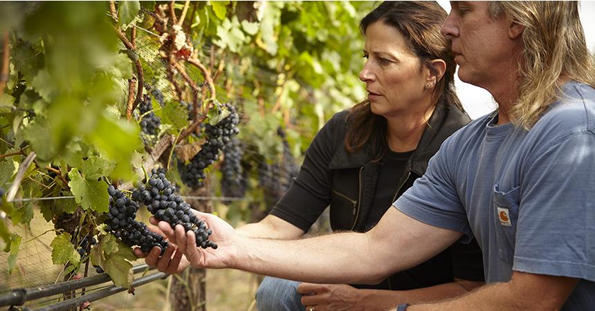 man and woman looking at grapes in a vineyard