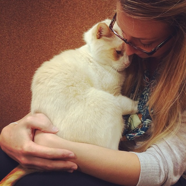 EB_Energy Assets_SW WA HS Cat hug