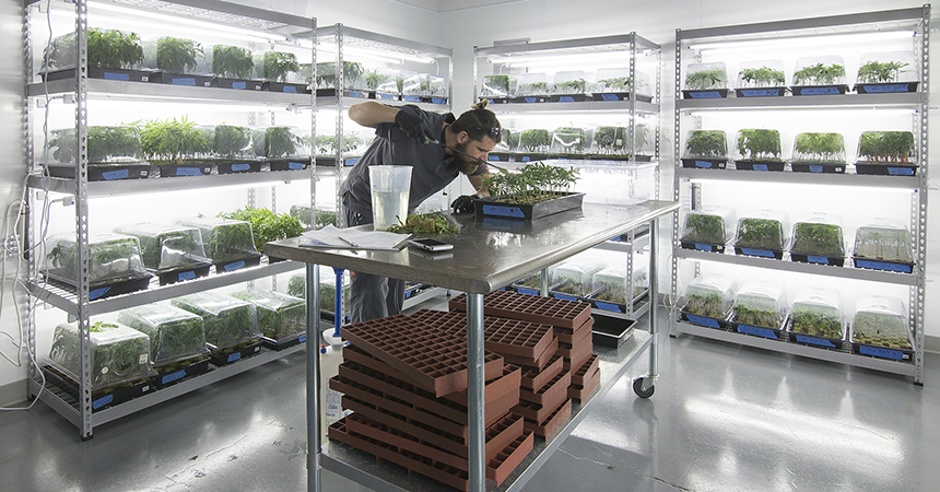 John Harmon, a cultivation techncian with Cloud Cover Cannabis, feeds plants in a clone room at QPS' north Portland grow facility.