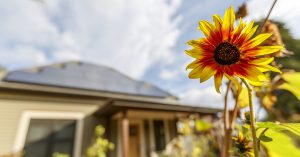 a flower in the foreground and a solar home in the background