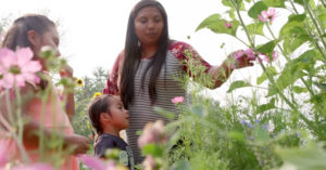Native American mother and two daughters look at flowers in a field.
