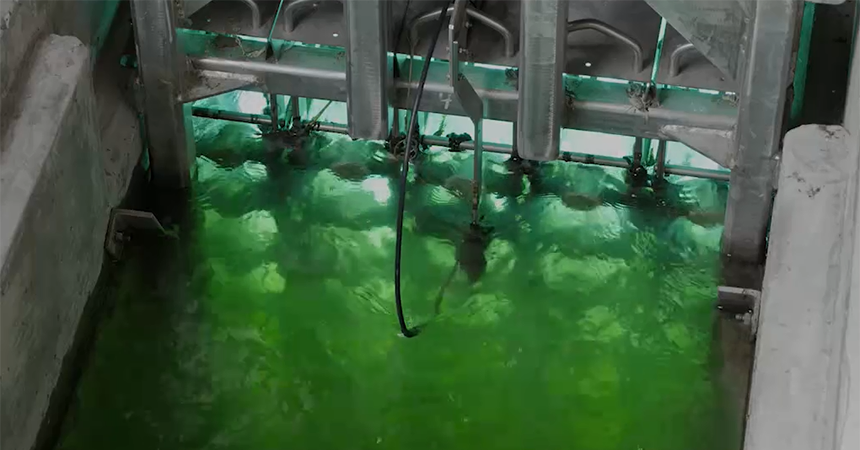 water that appears that its glowing green