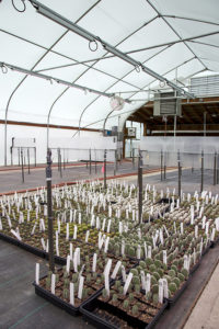 A new high-efficiency propogation greenhouse at Little Prince of Oregon nursery, Aurora, Oregon.