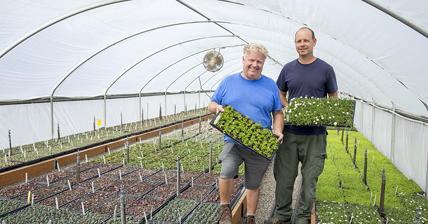 Two men hold flats of plants in Little Prince of Oregon nursery greenhouse.