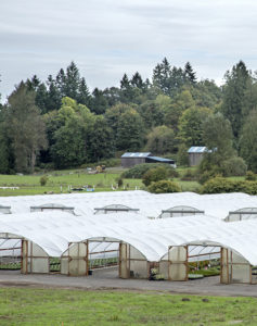 Greenhouses at Little Prince of Oregon nursery.