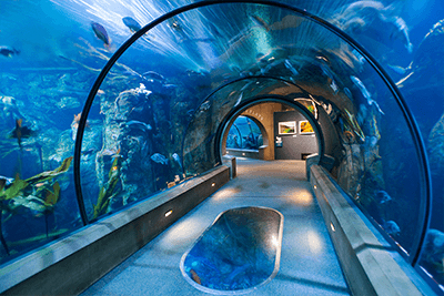 Oregon Coast Aquarium under water tunnel with fish