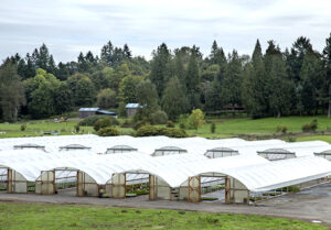 Oregon nurseries grow greener thanks to greenhouse improvements